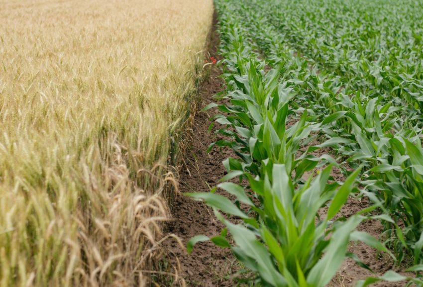 Аграрные науки, лесоведение и наука о продуктах питания | Agrar-, Forst-, Ernährungswissenschaften
