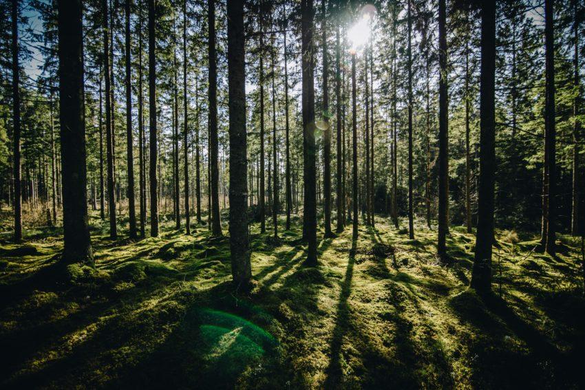 Лесоведение и экономика | Forstwissenschaften, – wirtschaft
