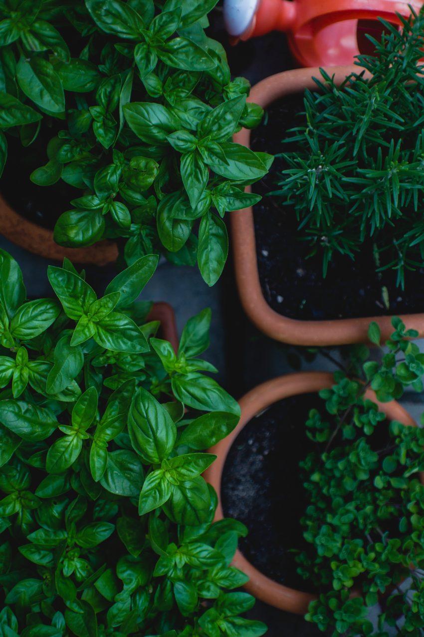 Садоводство и озеленение | Garten-, Landschaftsbau